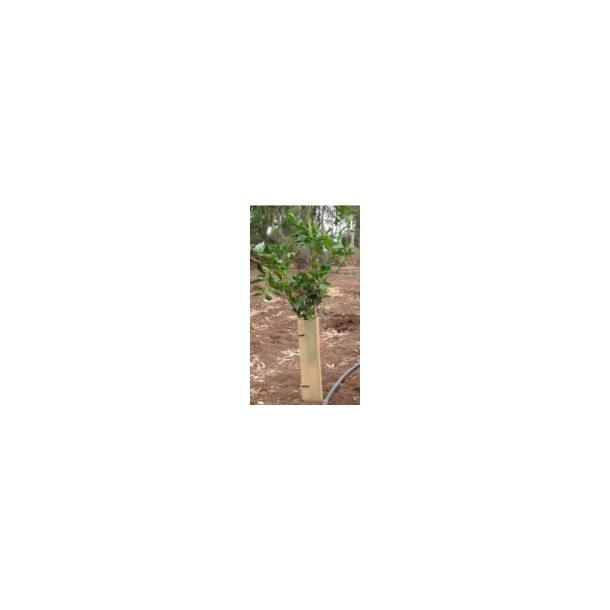 Paskal Plant Guard 40 cm
